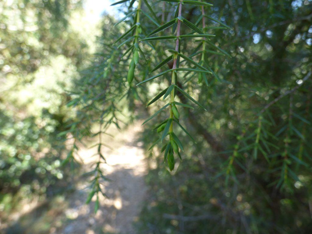 Végétation autour du Pic Saint-Loup