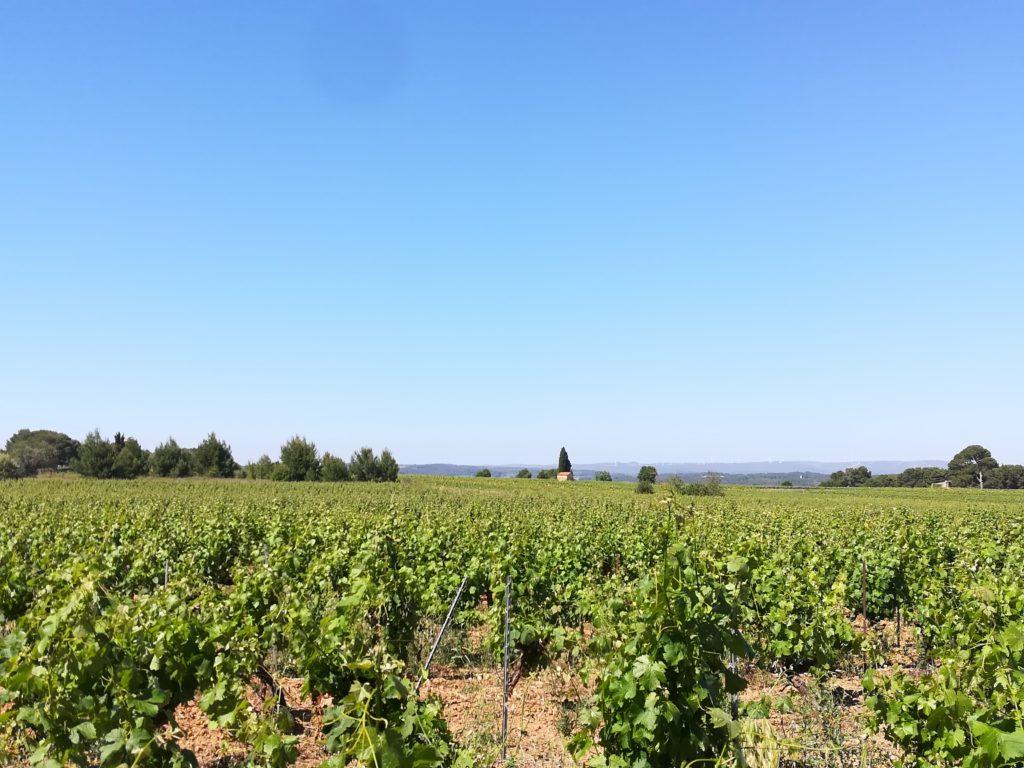 Promenade entre vignes et garrigue