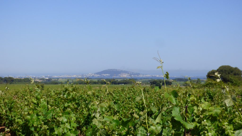 Vue depuis les vignes sur le Mont Saint Clair de Sète