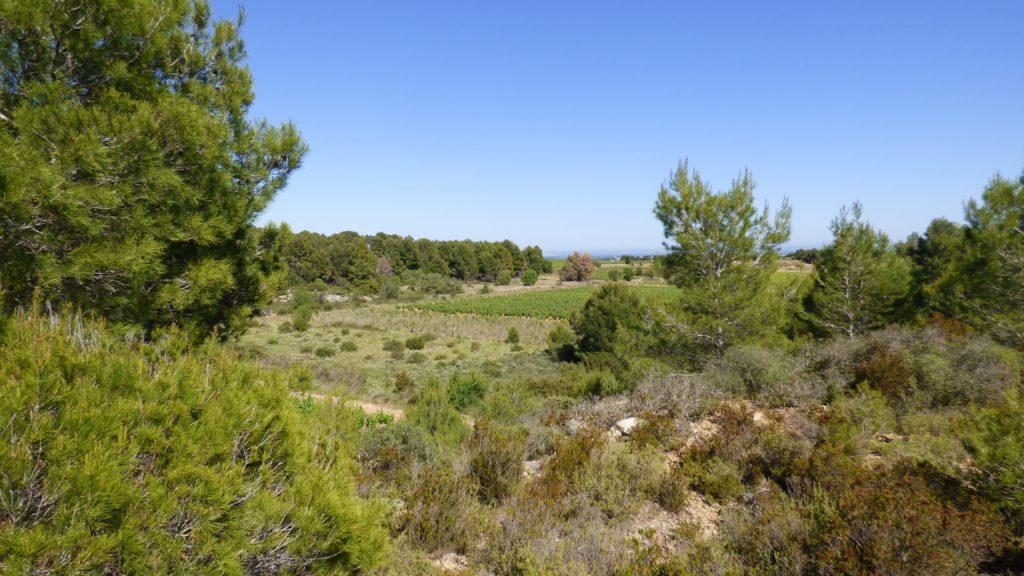 Vue paysage sur la vallée de Pinet, avec les vignes