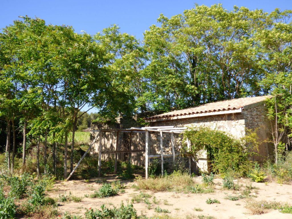 Mazet au milieu des vignes de Pinet