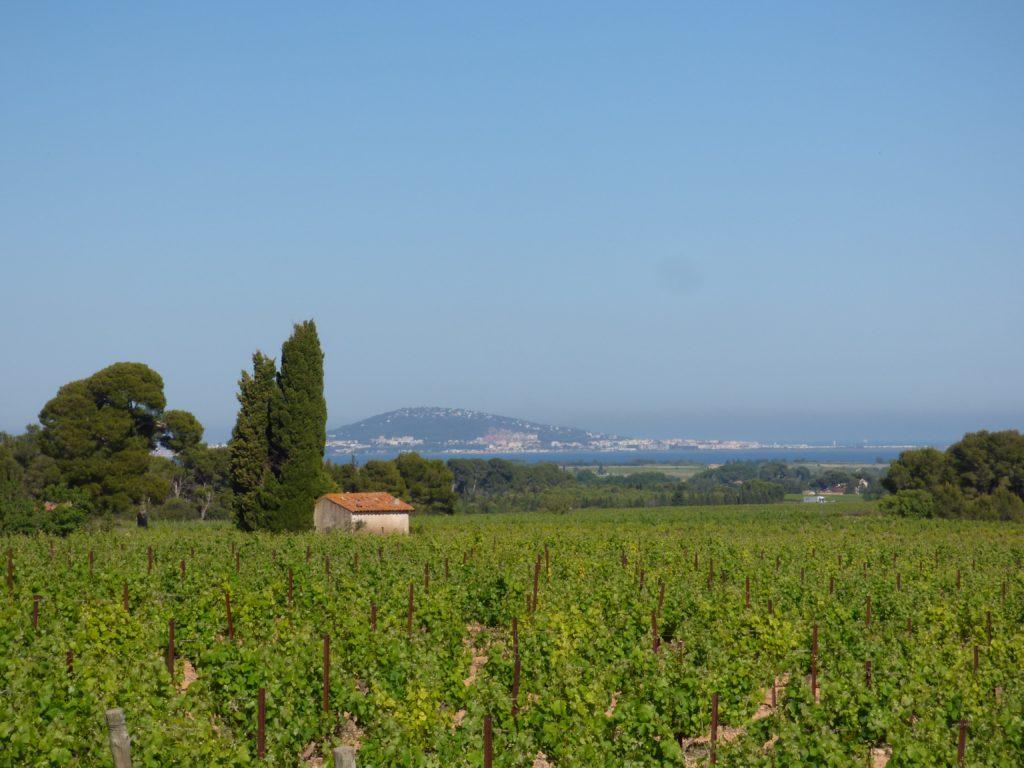 Vue sur le mont Saint Clair de Sète avec les vignes en premier champ et un mazet agricole