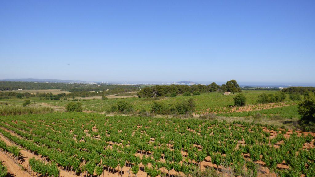 Champ de vignes à Pinet, face au Mont Saint Clair de Sète